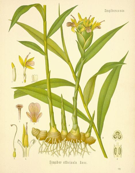 Some Common Spices and Plants with Antimicrobial and