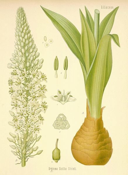 Botanical.com Home Pag...